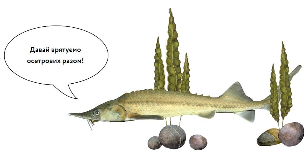 Image from Platforma feature about sturgeon facing extinction