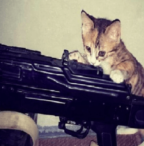Photos of cats and guns, posted by self-proclaimed terrorists, went viral