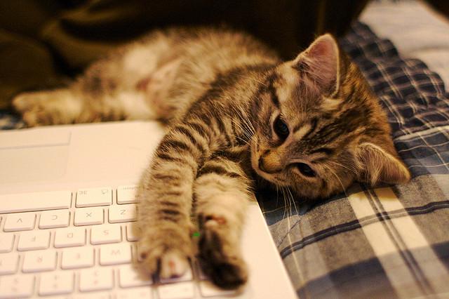 kittenpicture